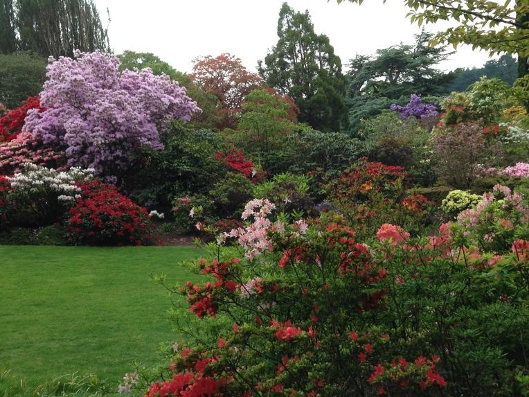 Bodnant Garden Azaleas