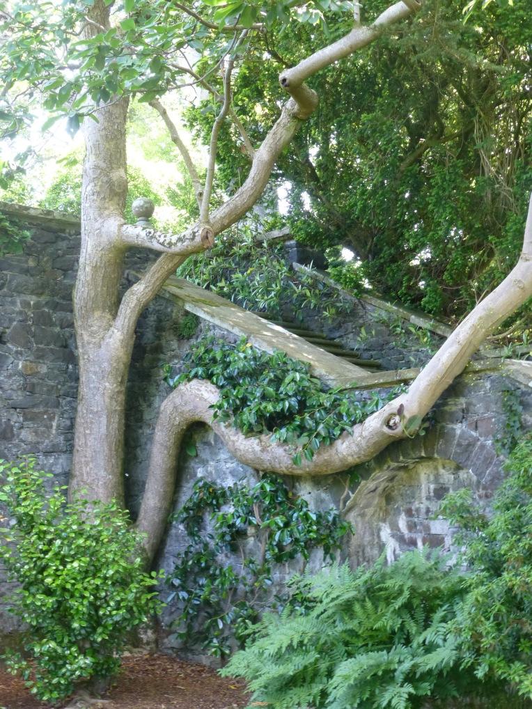 Bodnant Garden Tree
