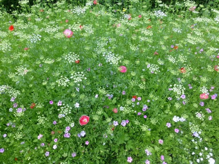 Bodnant Garden Wildflower border
